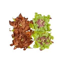 Набор гардений из 4 шт., диам. 7 см (цв. коричневый и светло-зеленый)